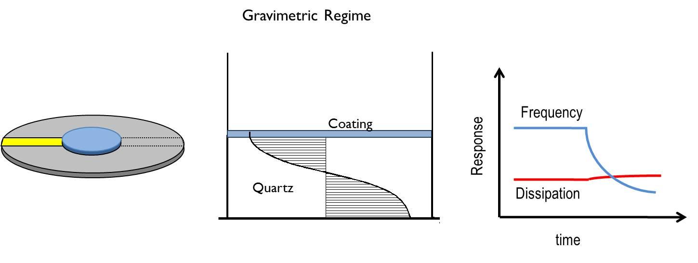 QCM Gravimetric Regime
