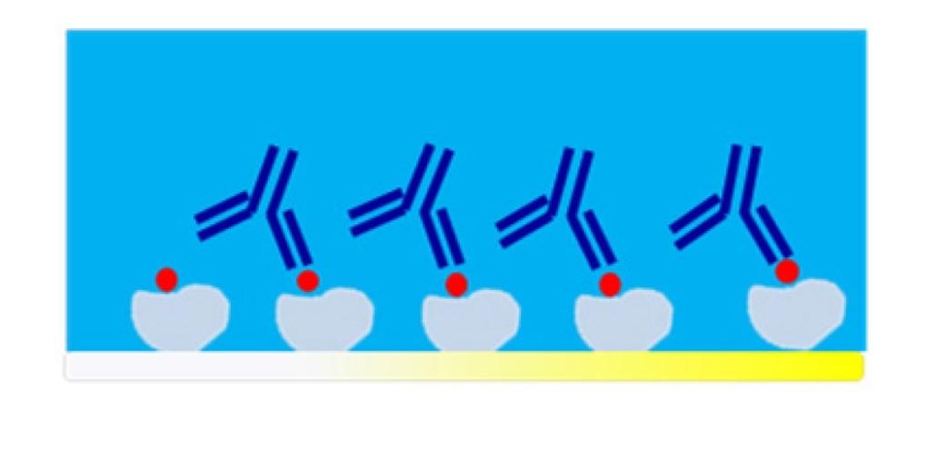 QCMD Immunosensor